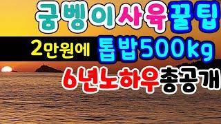 굼벵이 돈되는비결공개 판매전략 발효톱밥 최저가 구입요령