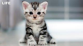 Бездомных котят отдают в добрые руки