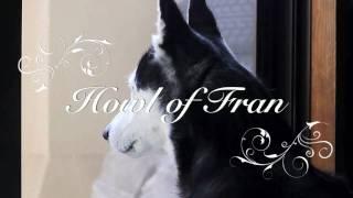 ハスキー犬フランは雌犬です。年2回、さかりの期間だけ、朝夕のカラスの...