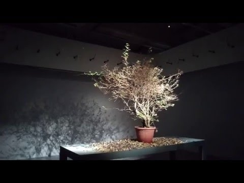 Moving Plant in the Taipei Fine Arts Museum