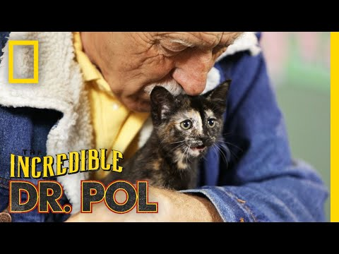 Keeping Up With Kittens  Season 2, Episode 6  Barnyard Babies with Dr. Pol