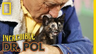 Keeping Up With Kittens - Season 2, Episode 6 | Barnyard Babies with Dr. Pol