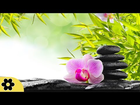 Zen Music, Relaxing Music, Calming Music, Stress Relief Music, Peaceful Music, Relax, ✿3256C