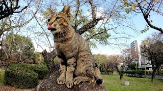 大きな石の上に座り人間を見下ろす猫