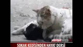 اغرب فيديو تشاهدة سبحان الخالق