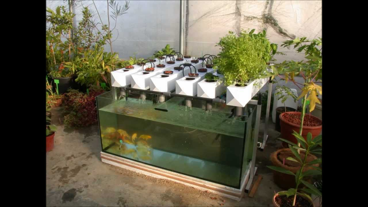 Easy and Healthy Backyard Aquaponics Build Your Own Aquaponic