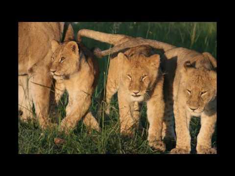 Think of going Safari in East Africa Tanzania