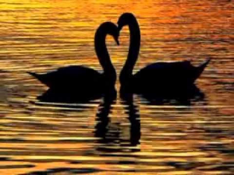 Los cisnes...canción inmortal de amor... J2L Music