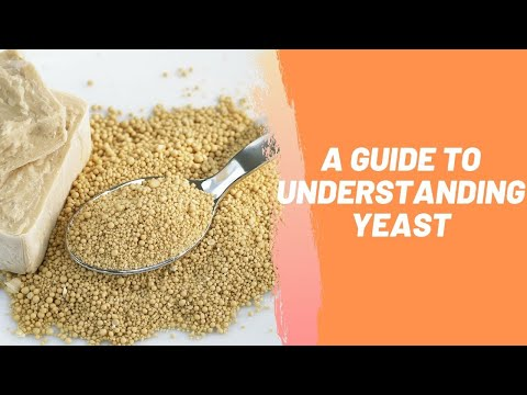 A Guide To Understanding Yeast