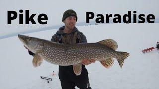 BIG Pike Paradise 23 hours straight fishing