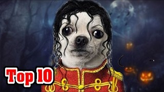 20 BEST Halloween Costumes For PETS (Cats & Dogs)