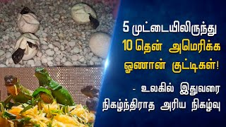 5-set-of-twin-iguanas-rare-phenomenon-in-chennai-hindu-tamil-thisai