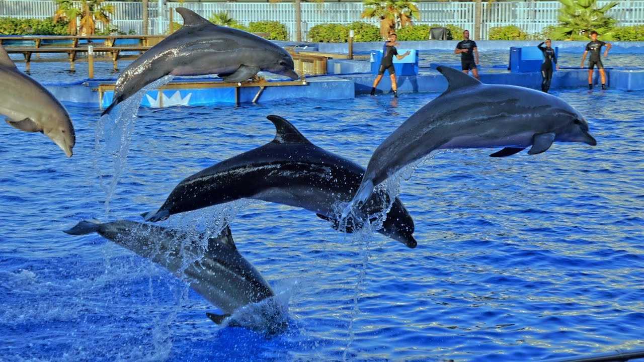 delfin musik