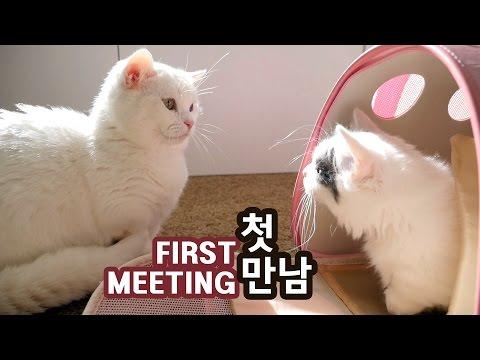 고양이 꼬부기와 쵸비의 첫 만남 FIRST MEETING OF TWO CATS