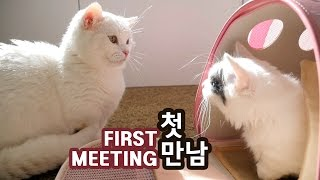 CAT MEETS KITTEN FOR THE FIRST TIME