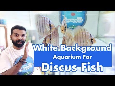White Vinyl Sticker Background Aquarium Ideal For Discus Fish
