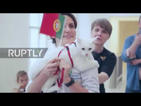 Russia: Achilles the Cat predicts victory for Portugal in Group A final clash of Confederations Cup