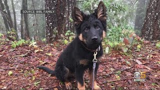 SANTA CRUZ MT SEARCH:  Family mounts search for beloved lost dog in Santa Cruz Mountains