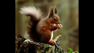 How to get rid of squirrels in your yard - Ultimate squirrel repellents