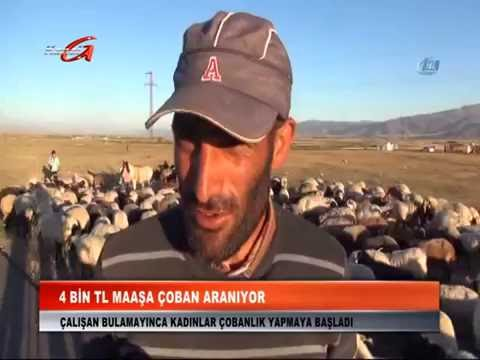 KANAL G 4 Bin TL Maaşa Çoban aranıyor