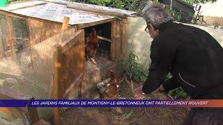 Yvelines | Les jardins familiaux de Montigny-le-Bretonneux ont partiellement rouvert
