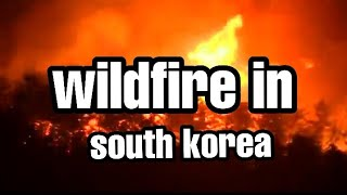 WILDFIRE IN SOUTH KOREA 2019