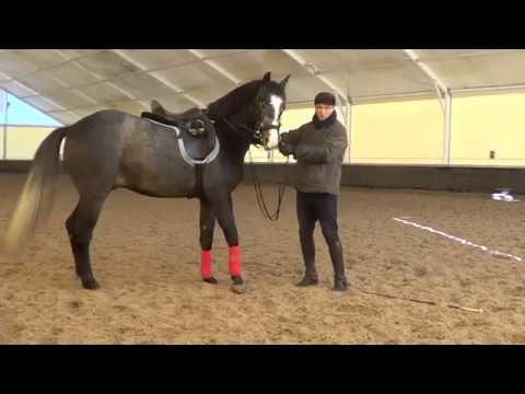 Обучение лошади -