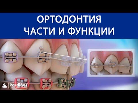 Что делает стоматолог ортодонт?