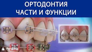 Ортодонтия - Части и функции ©