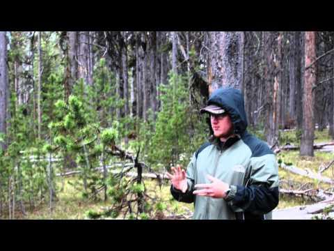 Project Yellowstone 2014