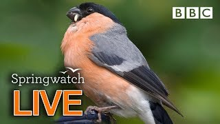 Live wildlife cams Day 7  | BBC Springwatch