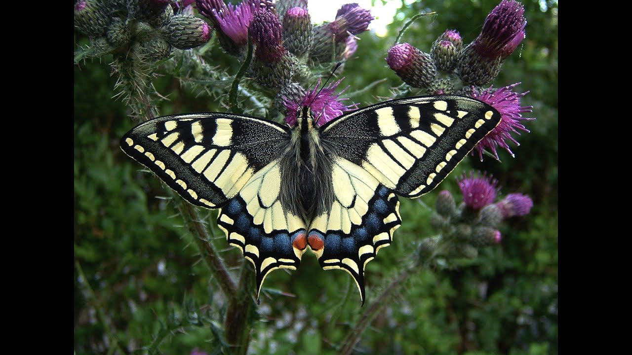 21 mooie kleurrijke vlinder -#main