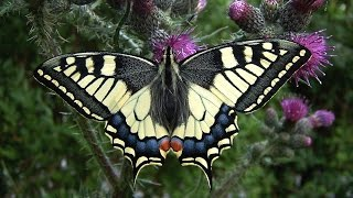 Van ei tot vlinder