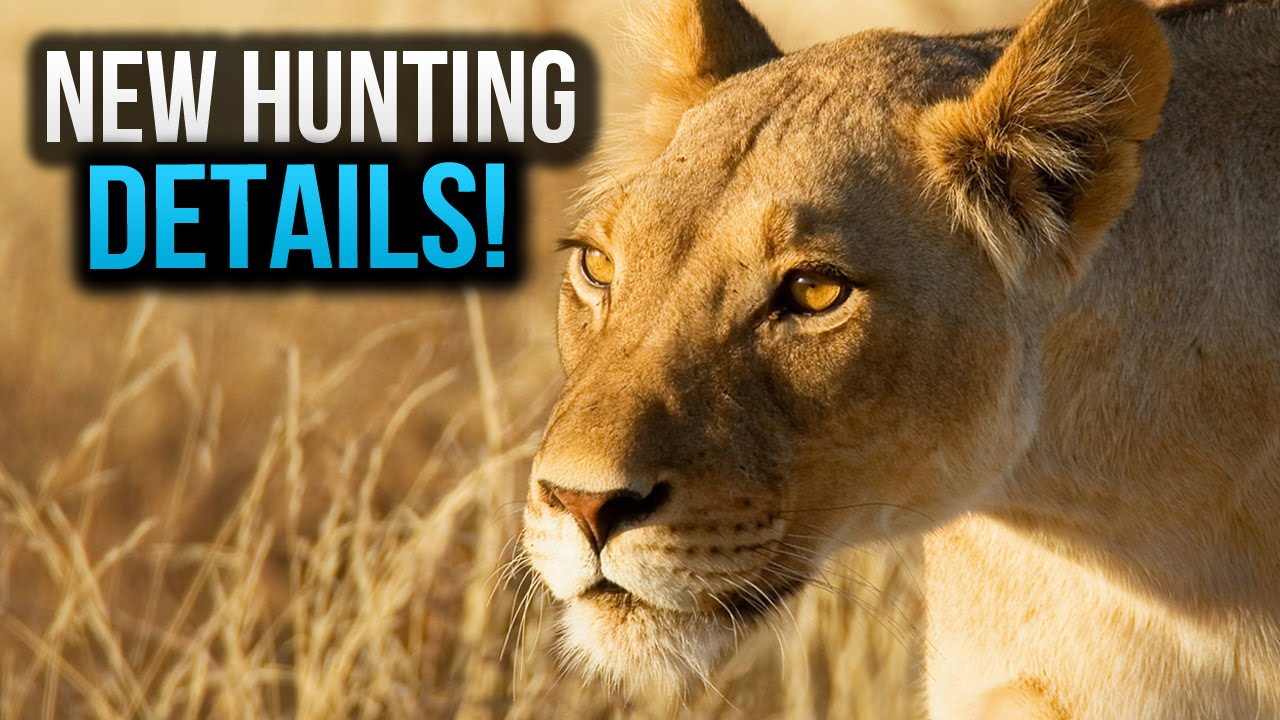Far Cry 4 Hunting! Attracting Animals,Bait & More! Refined