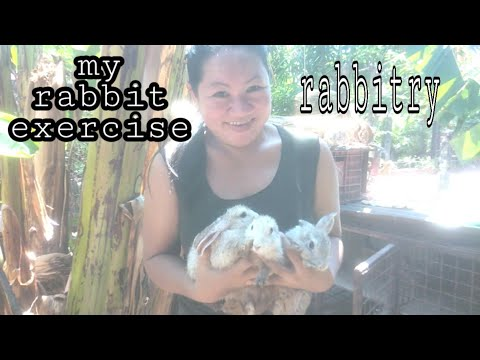 rabbit-excercise-routine-/-eating-grass-in-yard