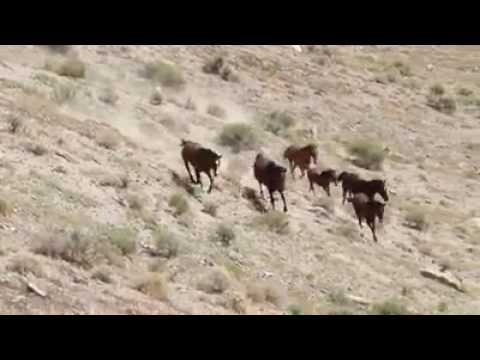 Help Stop The Cruel Bureau Of Land Management Horse Roundups