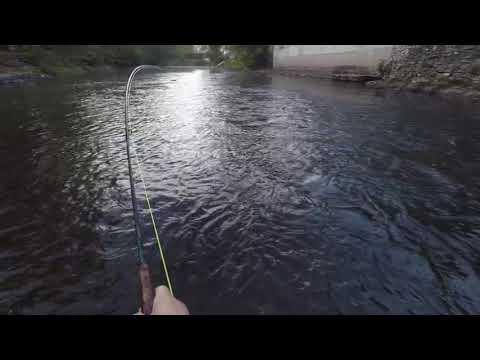 Cherokee NC Fishing