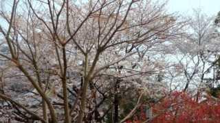 戦国時代には斎藤道三の居城でもあった 1567年に織田信長がこの地を攻略...