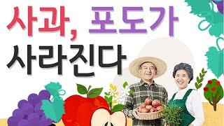 [카드뉴스] 과일 지도가 바뀐다..사과ㆍ복숭아도 수입?