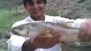 Carp Fishing MAHSEER (MAHASHER) - Pakistan