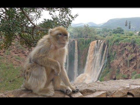 Morocco, Ouzoud waterfalls and monkeys, 4K UHD
