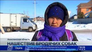 Отстрел бродячих собак разрешили в поселке Косшы близ Астаны