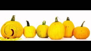 Google Halloween Doodle 2011 - Behind The Scenes: Pumpkins Test