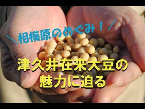 津久井在来大豆の魅力に迫る!