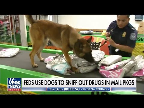 Dog to sniff out drugs in mail packages at Chicago Air Port | Feds Use