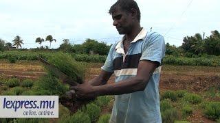 Saison des pluies : Les planteurs et marchands durement affectés