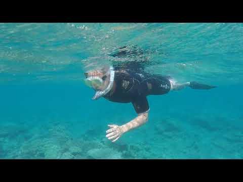 Snorkel Adventure feat. Hawksbill Turtle | Laka Lodge Diving Comoros
