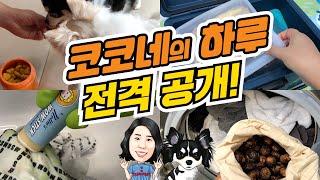 코코네의 하루 전격공개! (feat.아이허브)