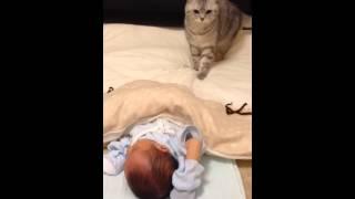 新生児の存在にはじめて気付いたマルの様子 thumbnail
