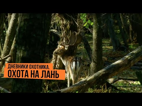 Дневники охотника. Охота на лань